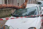Messina, cade un albero in viale Regina Margherita. Distrutta un'auto