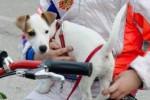 Cagnolino salva la vita al suo padrone nell'incidente di Spadafora, ma non sopravvive all'impatto