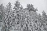 La neve scende copiosa in Sila: Lorica è uno spettacolo. Il video