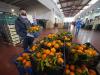 Agroalimentare, il Covid rallenta la crescita dell'export