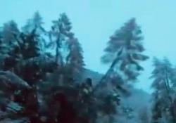 Alto Adige: gli alberi cadono come stuzzicadenti Allerta massima in Alto Adige, dove continua a nevicare: treni fermi, strade interrotte e pericolo valanghe - CorriereTV