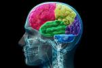 Come emergono mente e spirito dalla materia cerebrale?