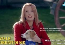 «È Natale, ricordati di me»: la campagna della Leidaa per gli animali rimasti soli a causa del Covid La campagna per le adozioni degli animali che hanno perso i loro proprietari a causa del virus - Corriere Tv
