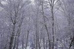 Calabria meravigliosa: non solo la Sila, la neve arriva anche a Gambarie - FOTO E VIDEO