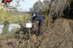 Estirpavano vegetazione in terreni del Cosentino. Denunciati due imprenditori agricoli