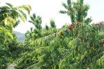Frutta e conserve della tradizione siciliana