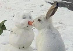 Il coniglietto e il pupazzo di neve: il video più dolce che vedrete oggi La breve clip è stata ripresa in un giardino in Canada - CorriereTV