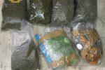 Messina, controlli anti-droga in zona nord: scovati 3 kg di marijuana tra la vegetazione