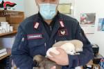 Orsomarso, cuccioli malnutriti e in mezzo ai rifiuti: denunciato il proprietario