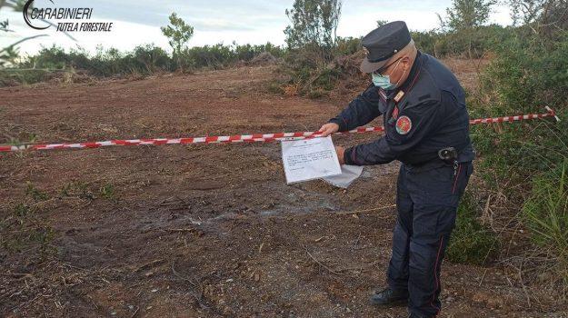 carabinieri forestali, denuncia, grisolia, maierà, sequestri, Cosenza, Cronaca