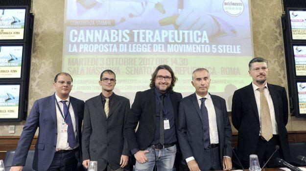 Dalla cannabis terapeutica al decreto sblocca Italia, tutte le battaglie di Lello Ciampolillo