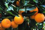 Agricoltura: Scilla, priorità Psr, spesa fondi Ue e Recovery