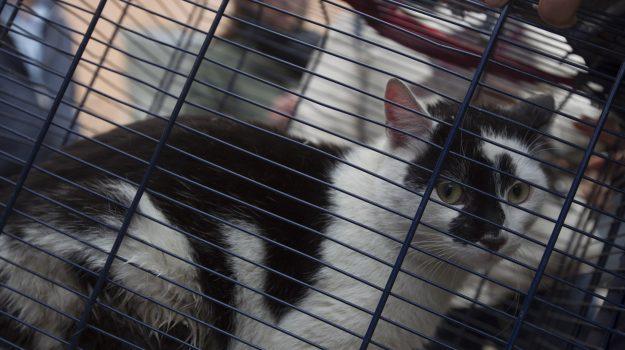 gatto sopravvissuto, torino, Sicilia, Cronaca