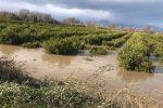 """Corigliano-Rossano, esondazione fiume Crati. Confagricoltura: """"Situazione insostenibile"""""""