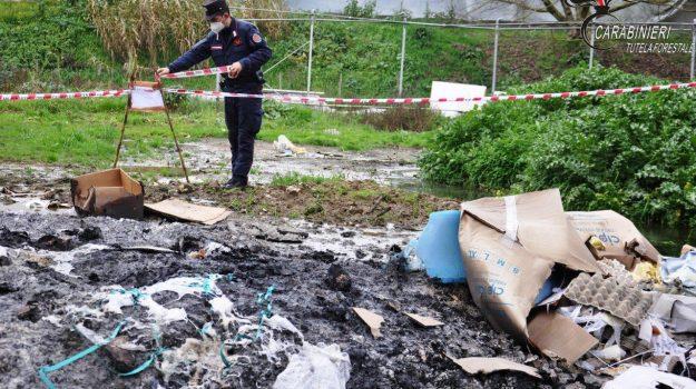 Azienda avicola, cosenza, reati ambientali, rifiuti abbandonati, Cosenza, Cronaca