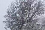 La neve è arrivata in provincia di Cosenza
