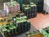 Agroalimentare settore chiave economia, Italia leader in Europa