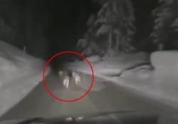 Automobilista insegue e minaccia branco di lupi: il video girato sulla strada di Passo Tre Croci Le immagini hanno suscitato rabbia e sdegno tra gli animalisti - Corriere Tv