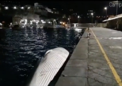 Balena morta a Sorrento: è la più grande avvistata (finora) del Mediterraneo In corso a Napoli le indagini per individuare le cause del decesso dell'animale - Corriere Tv
