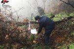 Carolei, tagliava e trafugava illecitamente degli alberi. Scatta la denuncia