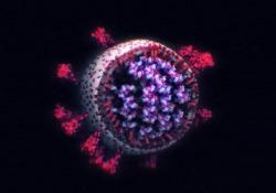 Com'è fatto davvero il coronavirus: la foto in 3D lo mostra nei minimi dettagli Non si tratta di un modello, ma di immagini 3D di veri e propri virus SARS-CoV-2 provenienti da campioni congelati - CorriereTV