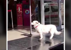 Il cane che aspetta per giorni il padrone malato davanti all'ospedale Un cagnolino ha trascorso giorni in attesa fuori da un ospedale in Turchia, dove era in cura il suo proprietario - CorriereTV