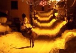 Il cervo tra la neve per le vie del paese deserto: scena da fiaba in Abruzzo La scena filmata da un uomo sceso a spalare la neve davanti alla sua casa a Civitella Alfedena, in Abruzzo - Ansa