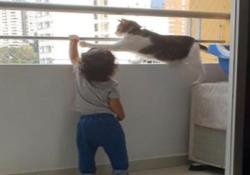 Il gatto iperprotettivo vuole impedire al bimbo di salire sul balcone Nel video diventato virale, il felino cerca di impedire al bambino di scavalcare la ringhiera di un balcone - CorriereTV