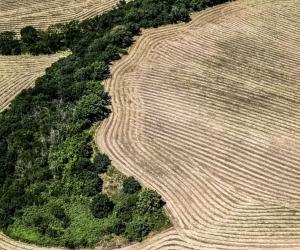 Istat, al via il Censimento generale dell'Agricoltura