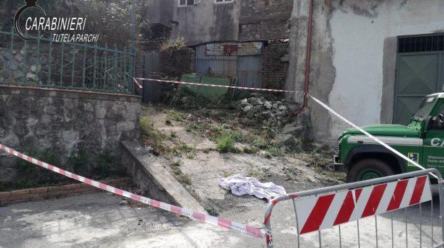 albi, cani avvelenati, carabinieri, denunciato, Catanzaro, Cronaca