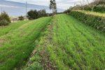 Messina, dall'abbandono alla produzione di grano antico: così rinascono i terrazzamenti in pietra