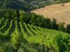 Nel Lazio in arrivo 1 mln per 17 filiere agroalimentari