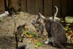 """Impedisce di accudire i mici, le """"gattare"""" insorgono contro il parroco"""