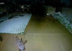 Questo orsetto si diverte un sacco con i fiocchi di neve Le telecamere di sicurezza hanno catturato la reazione curiosa e adorabile di un cucciolo quando ha visto cadere la neve - CorriereTV