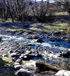 Aspromonte, sorpresi a tagliare faggi nella riserva naturale: due denunce