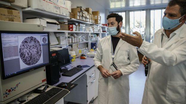 coronavirus, vaccino reithera, Sicilia, Cronaca