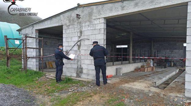 sequestro box animali Maierà, Cosenza, Cronaca