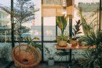 Covid: le piante in casa migliorano il benessere psicologico