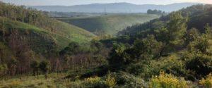 L'area boschiva in località Palombara a Sant'Onofrio dove dovrebbe sorgere la discarica