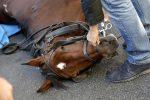 Cade da cavallo imbizzarrito nel Vibonese, grave diciassettenne