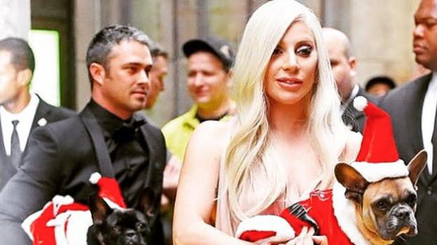 Rapiti due cani di Lady Gaga: offerto mezzo milione di dollari per il riscatto