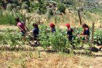 """Coldiretti Giovani Calabria: """"L'agricoltura sociale per l'inclusione dei bimbi con disabilità"""""""