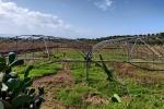 """""""Coltiviamo Agricoltura Sociale"""", premiati i tre progetti vincitori"""