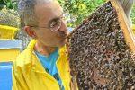 """Marsala, affetto da sclerosi multipla diventa il """"Signore delle api"""""""
