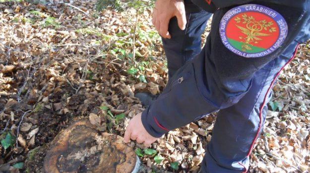 autorizzazioni illecite, brognaturo, carabinieri forestali, furto, truffa, Catanzaro, Cronaca