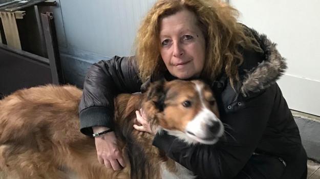 a1, autostrada, incidente mortale, pesaro, staffettista di animali, Elisabetta Barbieri, Sicilia, Cronaca