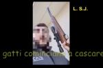 Il gatto miagola e lo sveglia, lo uccide con un fucile - VIDEO