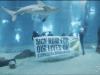 Ambiente, il flash mob sott'acqua contro il riscaldamento globale VIDEO