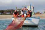 Calabria, via libera alla pesca della sardella con la sciabica