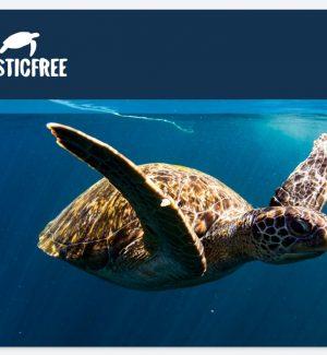 Scalea plastic free: è la prima città del Cosentino ad adottare il protocollo